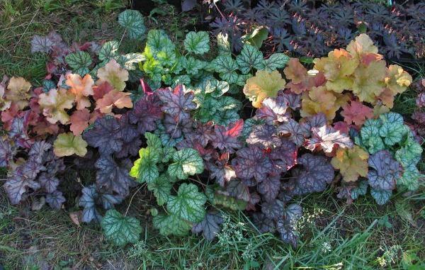 Какие растения любят тень? самые тенелюбивые цветы для сада: целых 10 штук!