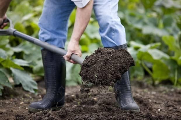 Фосфорные удобрения: применение, виды и значение