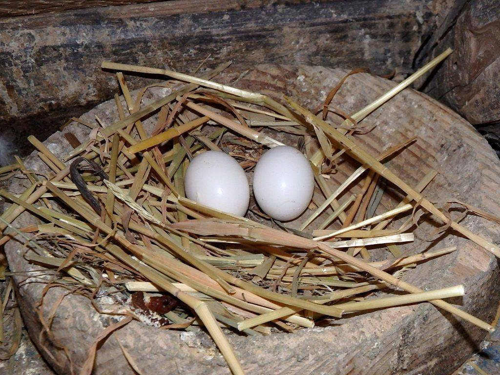 Дом, милый дом или как изготовить для голубей гнезда