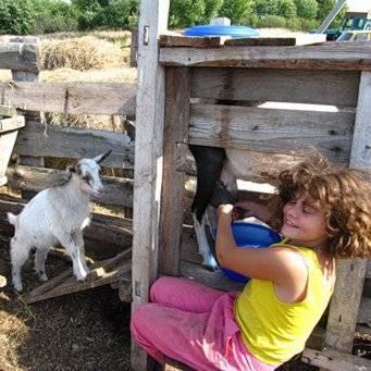 Как собрать доильный аппарат для коз своими руками или купить недорого