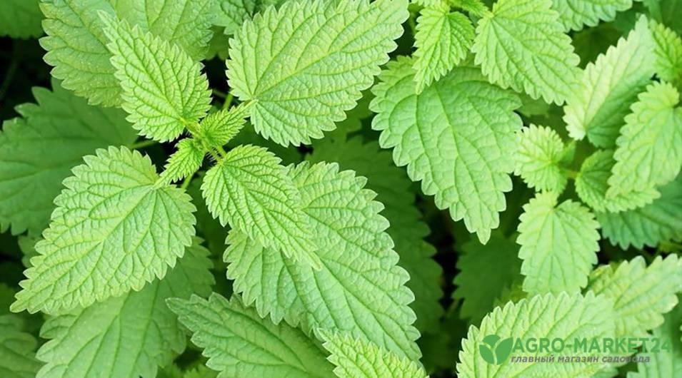 Как приготовит удобрение из травы? зеленое удобрение своими руками