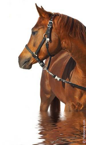 К чему снится лошади. видеть во сне лошади - сонник дома солнца
