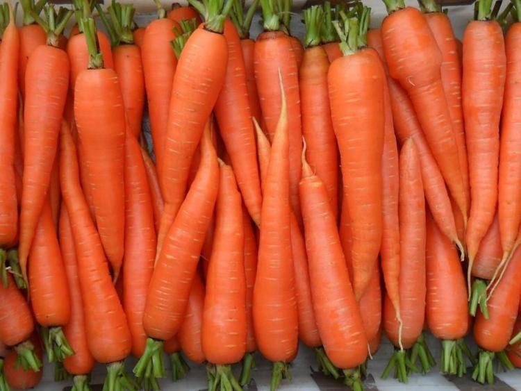 Топ-10 лучших сортов моркови – рейтинг 2020 года