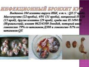 Монопрепараты от бронхита : инструкция по применению | компетентно о здоровье на ilive