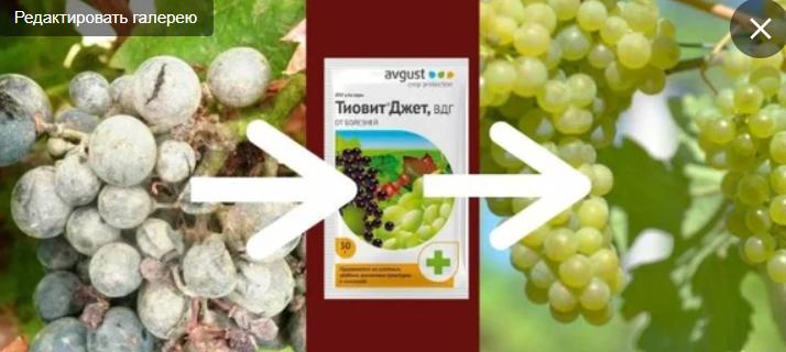 Тиовит джет: инструкция по применению для винограда