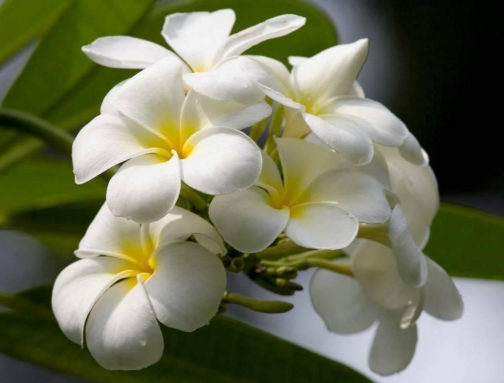 Как ухаживать за орхидеей – правильно в домашних условиях