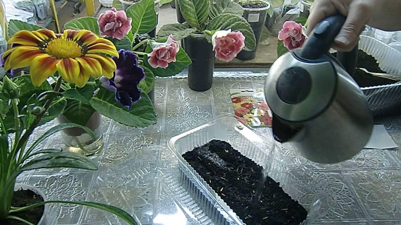 Как я сею перец на рассаду: замачивание семян, выбор емкости, температура прорастания