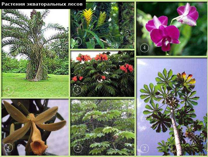 Орхидеи в природе: где и как растут в диких условиях, какие бывают — всё об окраске соцветий и шикарные фото на живых деревьях selo.guru — интернет портал о сельском хозяйстве