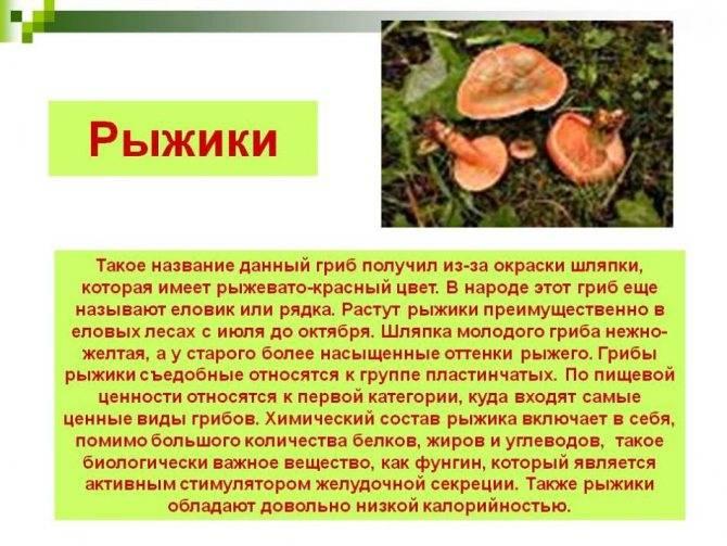 Грибы рыжики: описание и фото, где растут, когда собирать