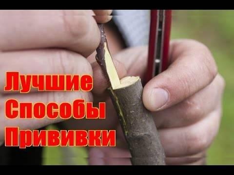 Способы прививки плодовых деревьев   на supersadovnik.ru