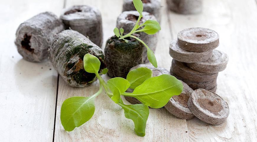 Торфяные таблетки: все секреты и преимущества выращивания рассады овощей и цветов в торфяных таблетках