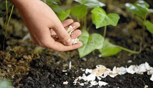 Как бороться с проволочником на огороде: народные методы