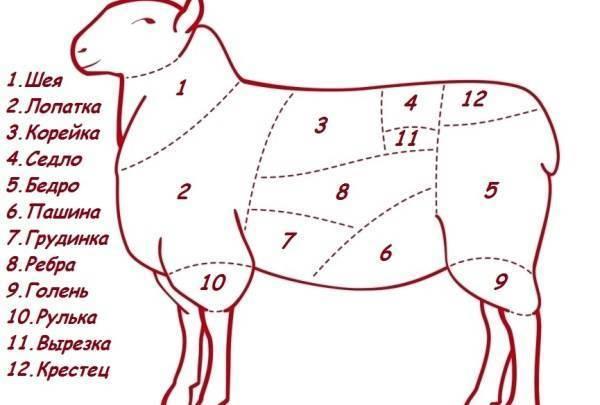 Как зарезать и разделать барана и овцу: пошаговая инструкция