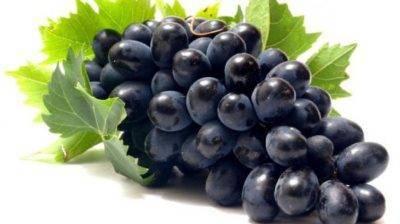Виноград «фурор»: новинка авторской селекции