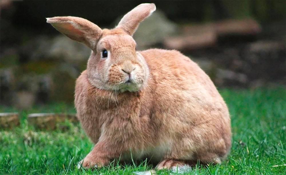 Самые интересные факты о кроликах