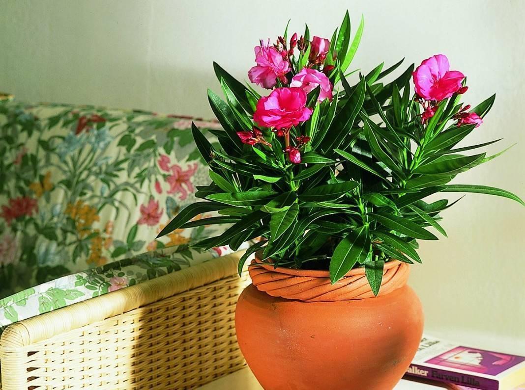 Самые красивые растения для дома