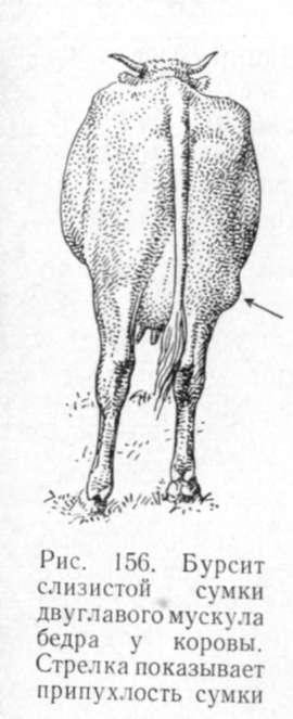 """Витамины корове после отела: нужны ли они и в каких количествах ао """"витасоль"""""""