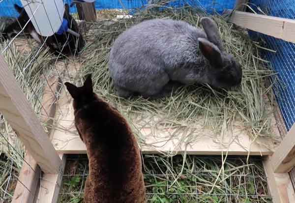 Кусаются ли кролики и что делать, если укусил кролик? - домашние наши друзья
