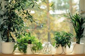 Автополив для комнатных растений и цветов своими руками