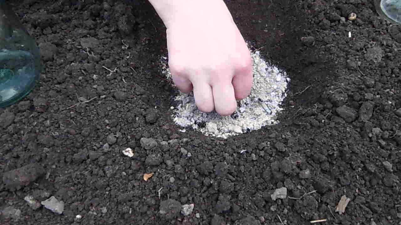 Выращивание кабачков: когда сажать семена в открытый грунт, посадка на рассаду