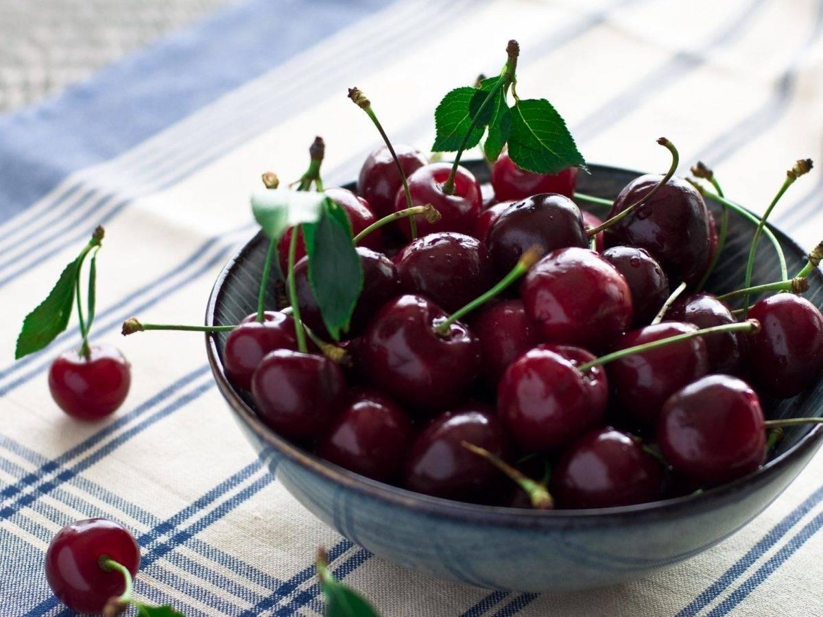 Сорт вишни призвание: описание с фото, отзывы