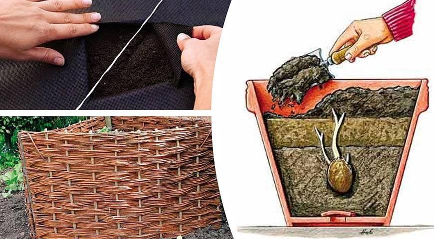 Выращивание картофеля в ящиках и коробах без дна: описание принципа, плюсы и минусы, необходимые условия, пошаговая инструкция и требуемый уход русский фермер