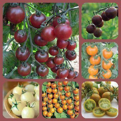 Лучшие сорта томатов черри