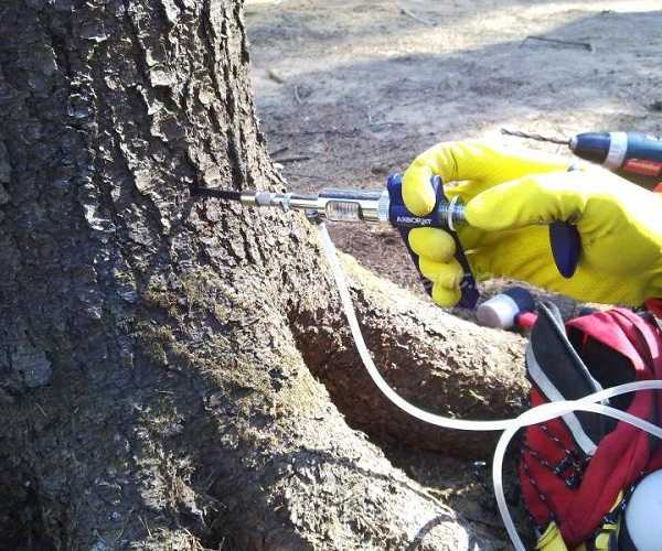 Чем полить дерево, чтобы оно засохло: 4 лучших способа