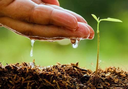 Свои огурцы уже в мае, или 7 секретов ранних огурцов. посев, сорта и уход. фото — ботаничка.ru