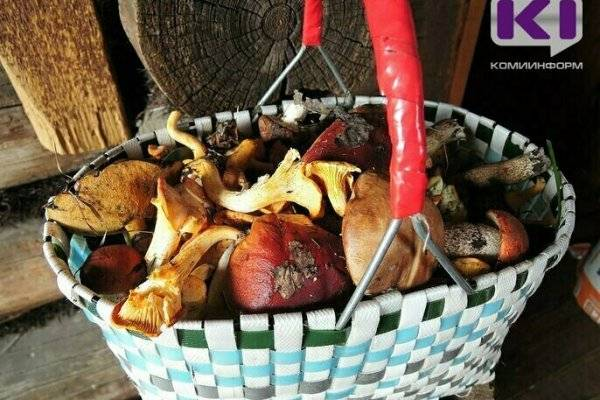 Червивые грибы: можно ли есть