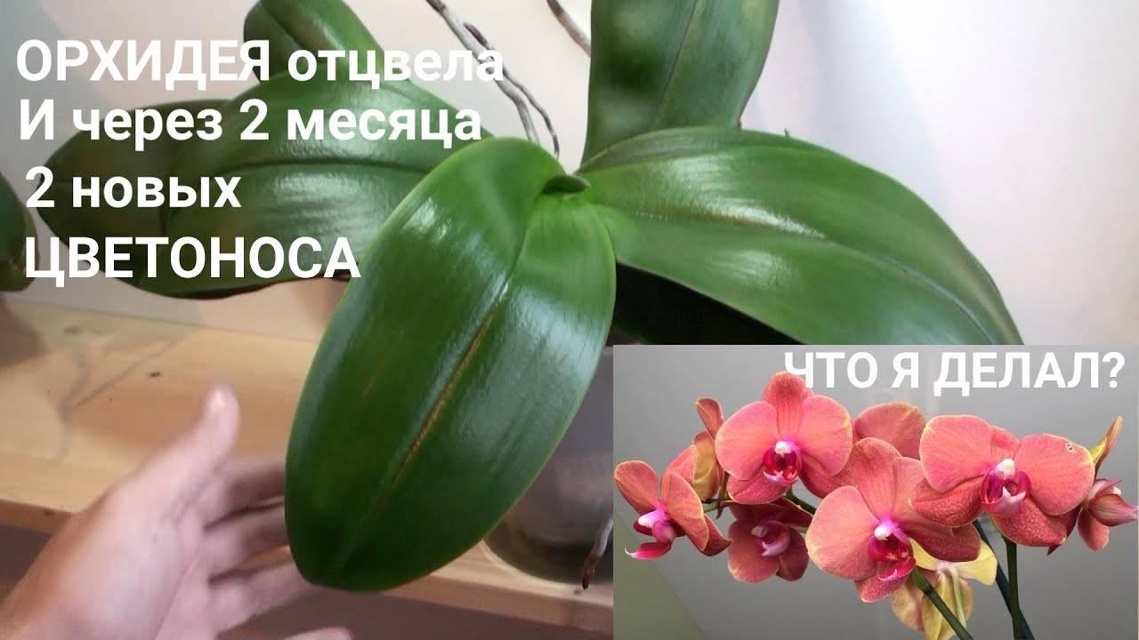 Орхидея отцветает, что делать дальше: когда цветонос должен отцвести, как нужно ухаживать за цветком после цветения и когда это должно произойти