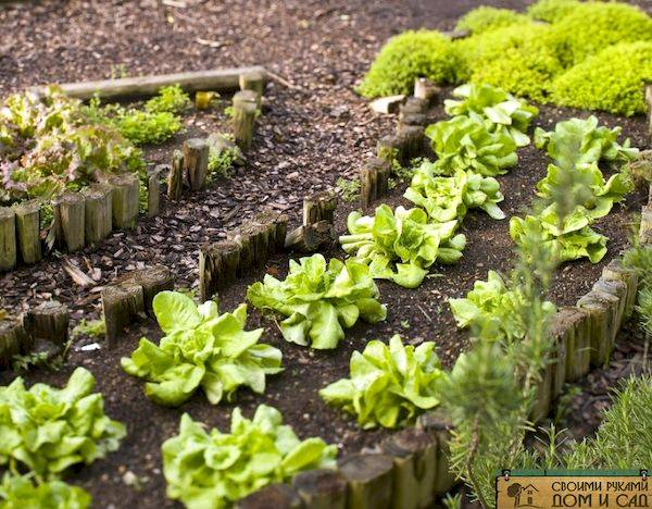 Как сделать и оформить красивые грядки на даче своими руками: простые, высокие, умные. для цветов и овощей. оригинальные идеи (80+ фото & видео)