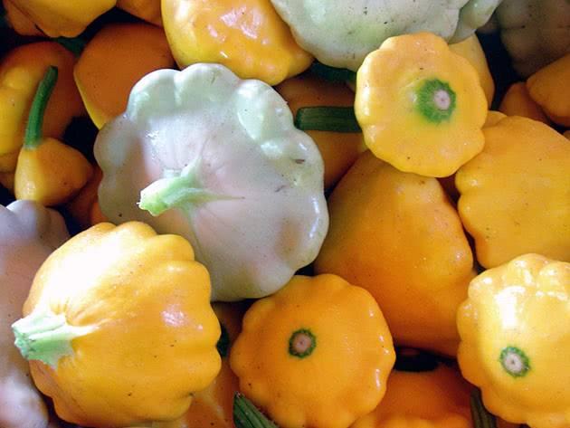 Овощ патиссон: лучшие сорта и фото, когда сажать и можно ли с кабачками, выращивание и уход в открытом грунте