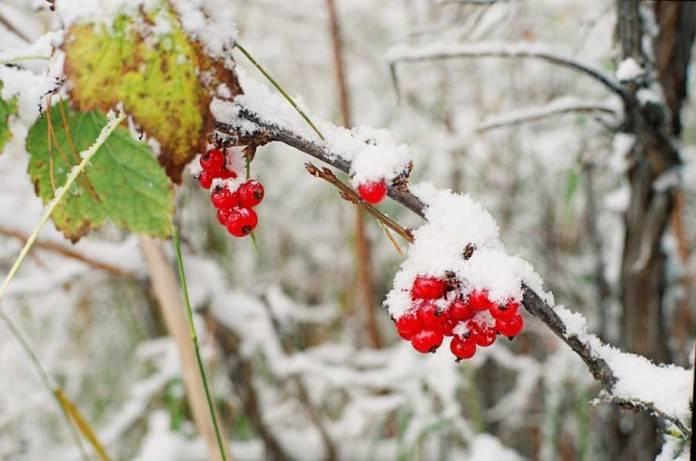 Особенности ухода за клубникой осенью: подкормка, обрезка, укрытие. как подготовить клубнику к зиме, чтобы увеличить урожайность - секреты садоводов