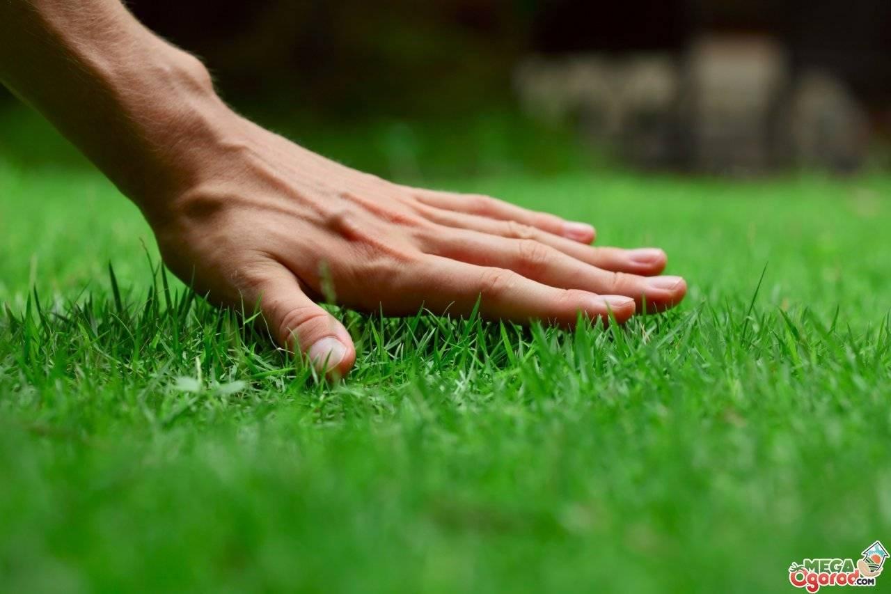 Как ухаживать за газоном правильно после зимы, какую технику выбрать