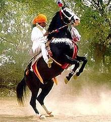 Марварская лошадь — википедия. что такое марварская лошадь