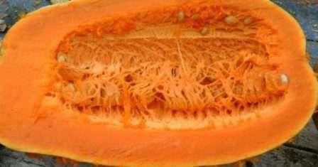 Тыква витаминная (витаминка): характеристика и описание мускатного сорта, фото полученного урожая