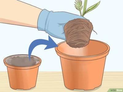 Когда пересаживать комнатные растения: основные правила и советы