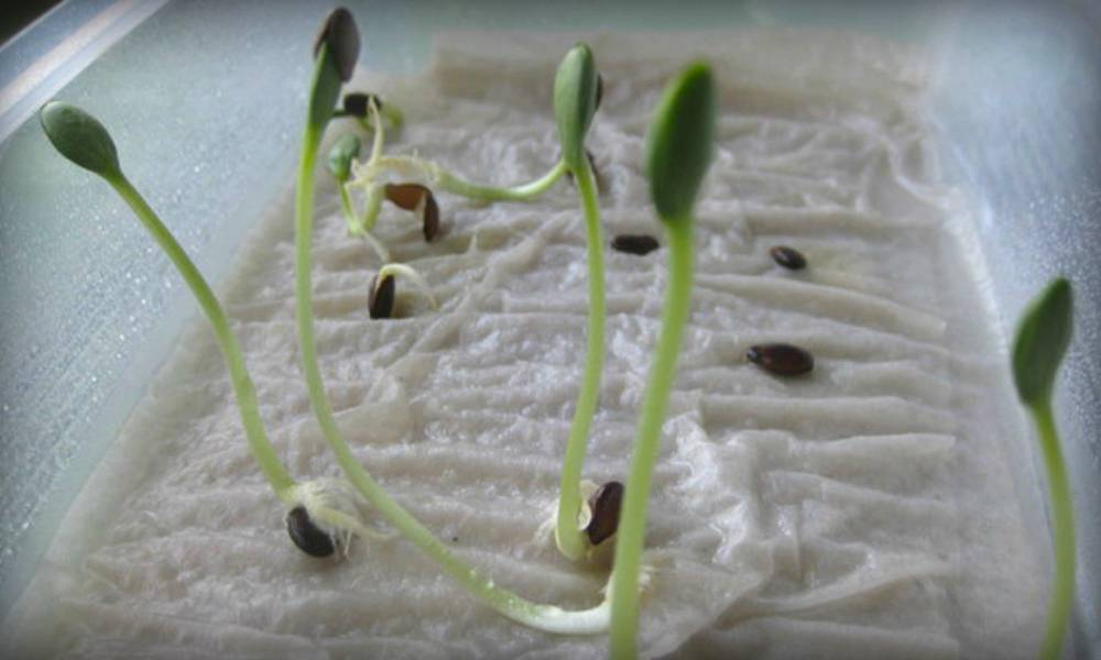 Рассада огурцов в домашних условиях: когда сеять, сколько всходят, особенности ухода после всхода русский фермер