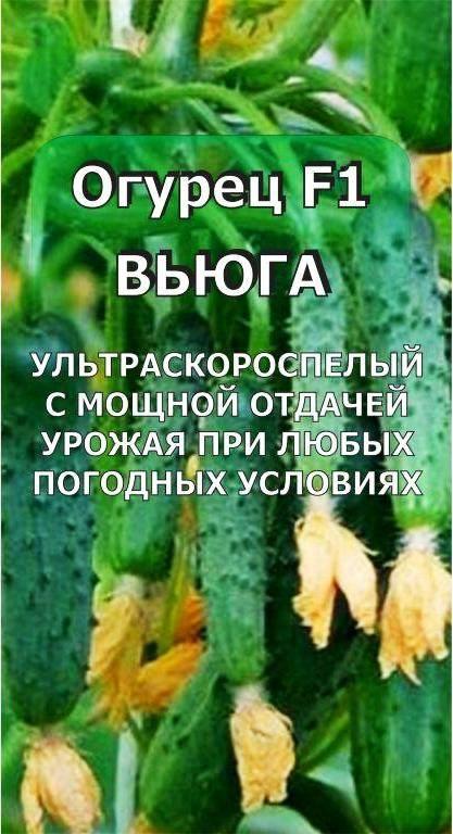 Топ – 20 сортов огурцов для открытого грунта