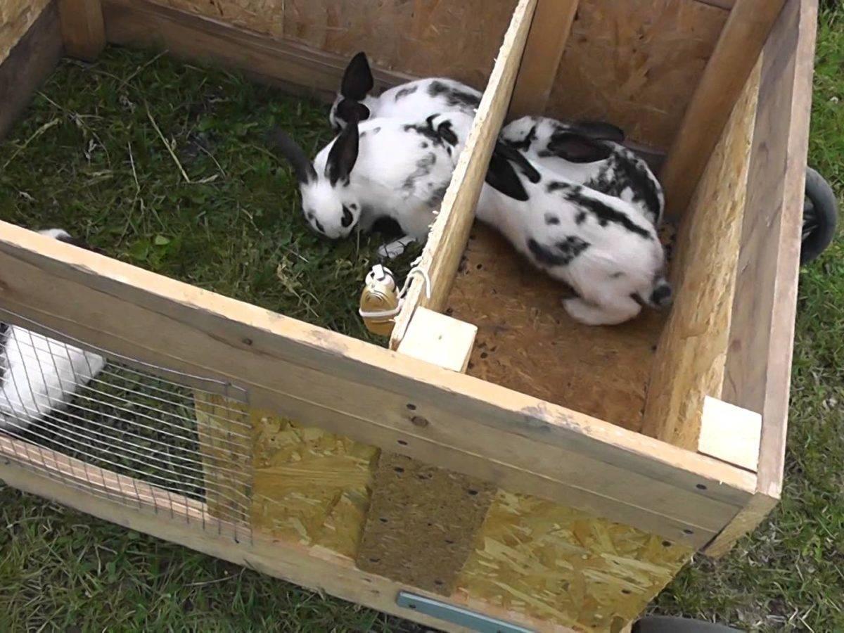 Как построить клетку для кроликов своими руками: подробная инструкция