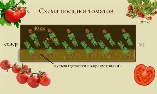 На заметку дачнику: как правильно сеять помидоры на рассаду в ящики
