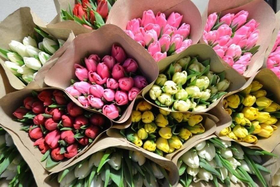 Где и как хранить луковицы тюльпанов зимой в домашних условиях