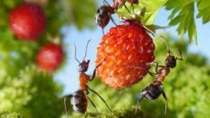 Вредная тля: как навсегда избавиться от насекомого на садовом участке?