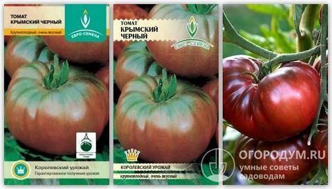 Успех на международном рынке помидоры – сорт томата «черный крым»: описание и основные характеристики