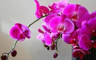 Рассказываем, почему у орхидеи вянут цветки