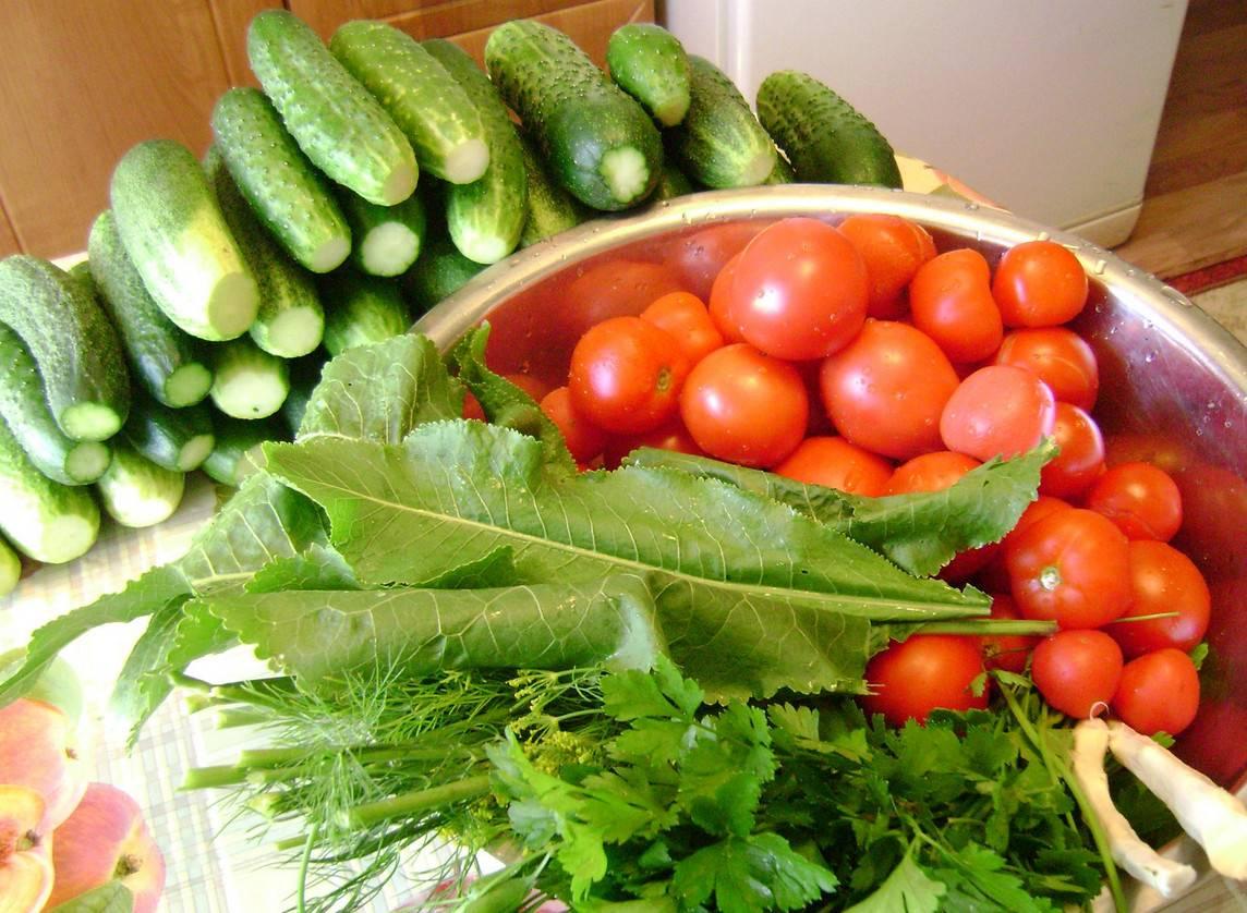 Подкормка дрожжами помидор и огурцов - как и когда следует удобрять овощи. 105 фото и видео приготовления подкормки
