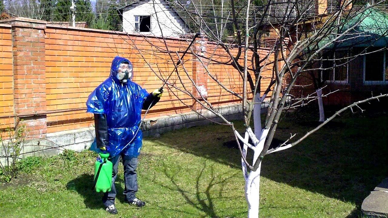 Бордосская жидкость (бордосская смесь): инструкция по применению в саду и огороде