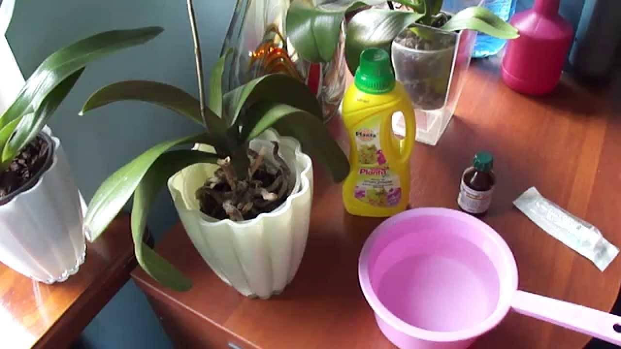Уход и удобрение орхидей: все основные правила, рекомендации, защита цветка