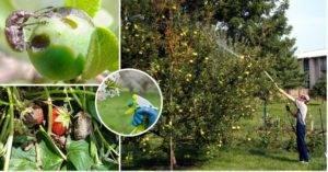 Нитрофен: инструкция по применению • для опрыскивания сада